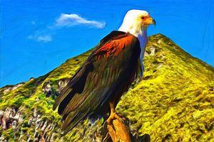 Bald Eagle on the Mount