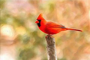 Cardinal on Post by W Joseph