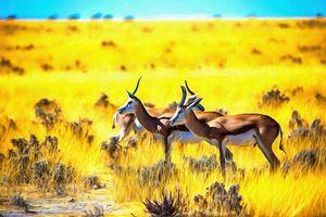 Springbok By W Joseph