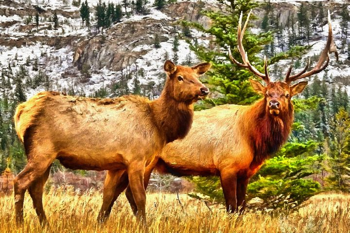 Elks by W Joseph - Joseph Wall Art