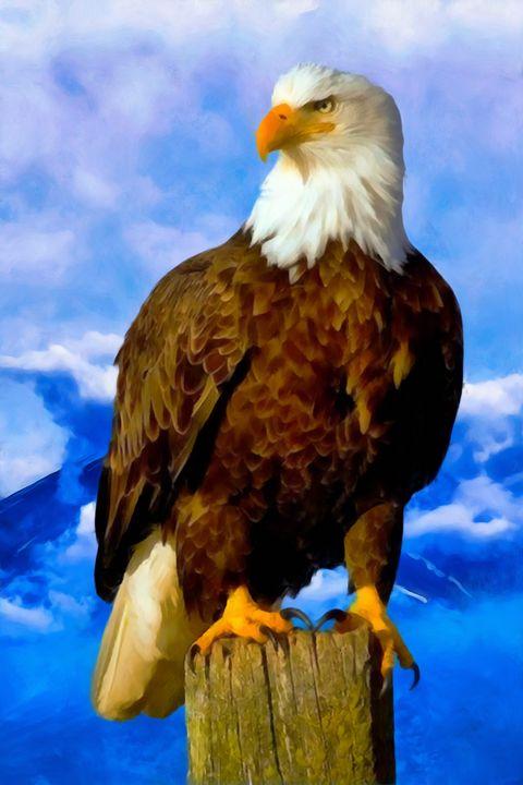 Bald Eagle - Joseph Wall Art
