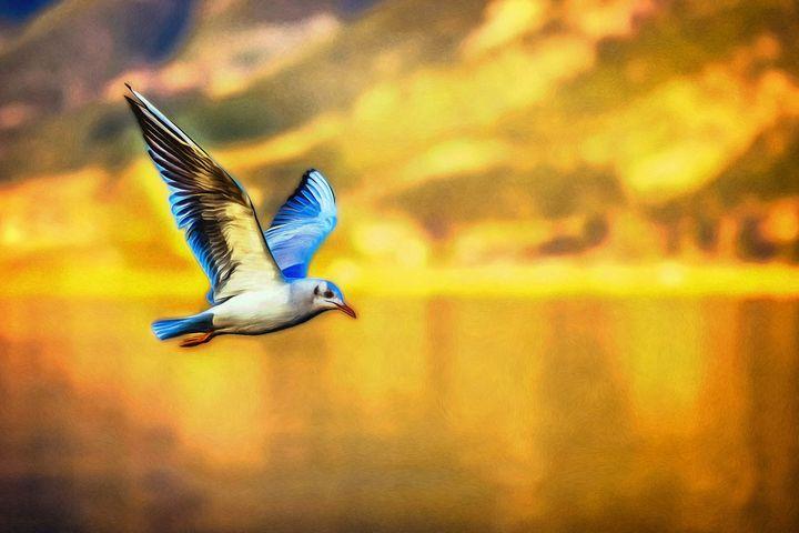 Gull Over Coast by W Joseph - Joseph Wall Art