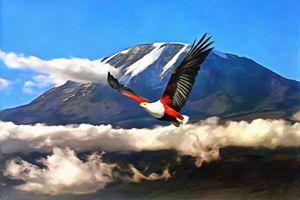 African Fish Eagle Near Kilimanjaro