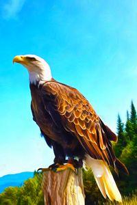 Bald Eagle Perched on Stump