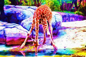 Giraffe Drinking at River