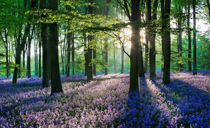 Violet Forest - Emma Lee