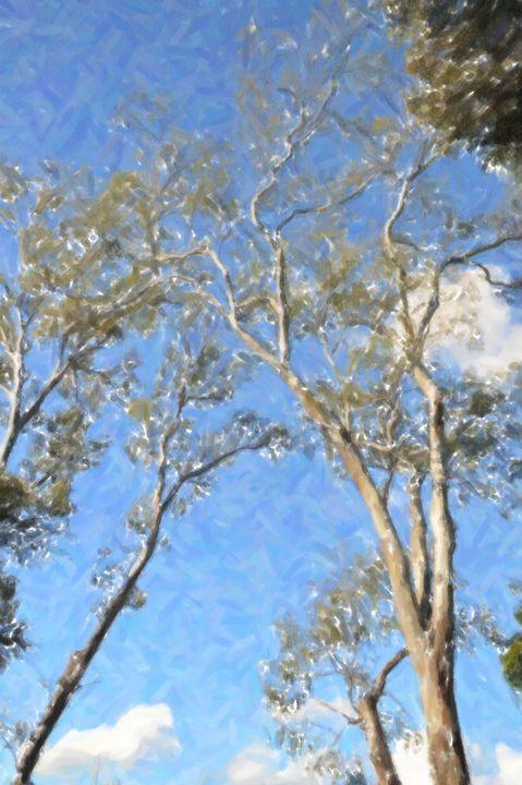 Looking Up - Phillip J GordonPhotography & Art