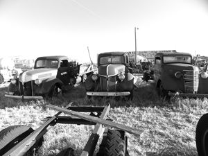 Old Chevy Trucks  Black and White