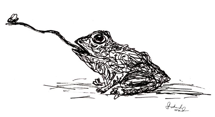 Frog eating a Fly - Shoshanah's Art