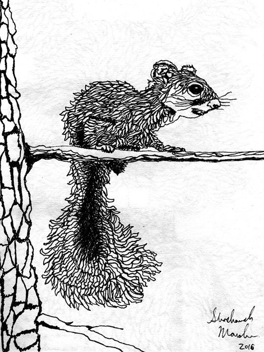 Squirrel - Shoshanah's Art