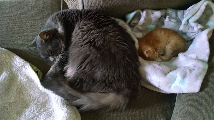 Oldest and Youngest Kitty - Scott Emerling