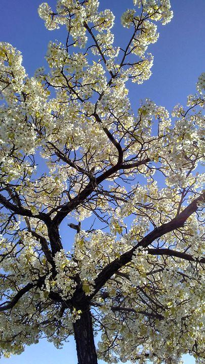 Spring - Catherine