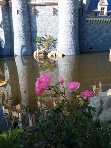 Castle Daydream