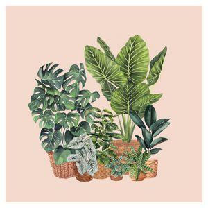 House Plants Illustration 3