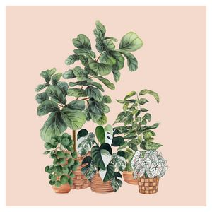 House Plants Illustration 4