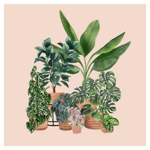 House Plant Illustration 5
