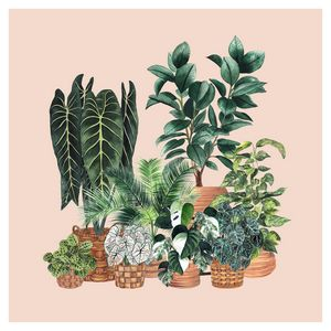 House Plant Illustration 6