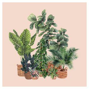 House Plants Illustration 7