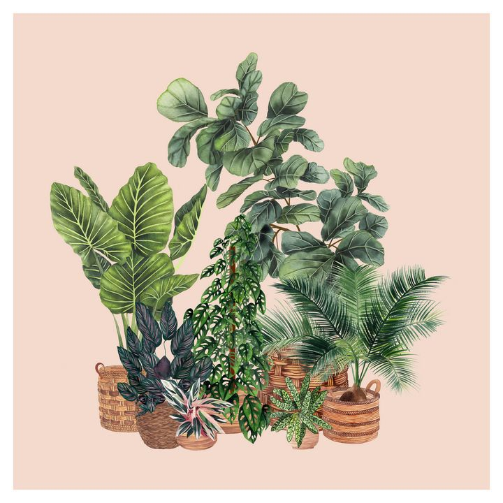 House Plants Illustration 7 - Gush Art Studio