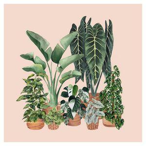 House Plants Illustration 8