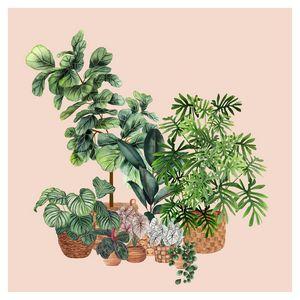 House Plants Illustration 9