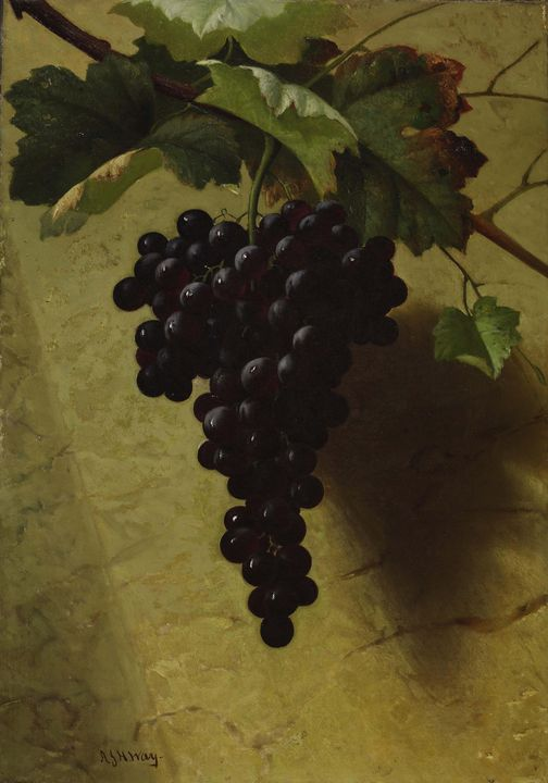 Andrew John Henry Wei~Bunch of Grape - Old master image