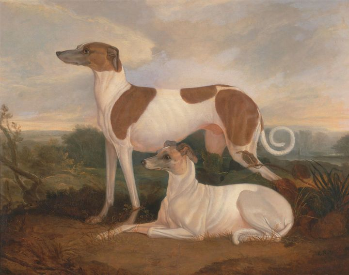 Charles Hancock~Two Greyhounds in a - Old master image