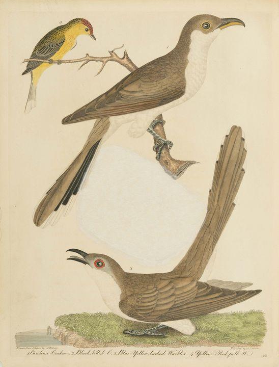 Alexander Wilson~American Ornitholog - Old master image
