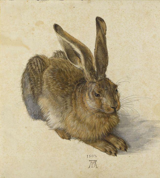 Albrecht Durerr~Hase - Old master image