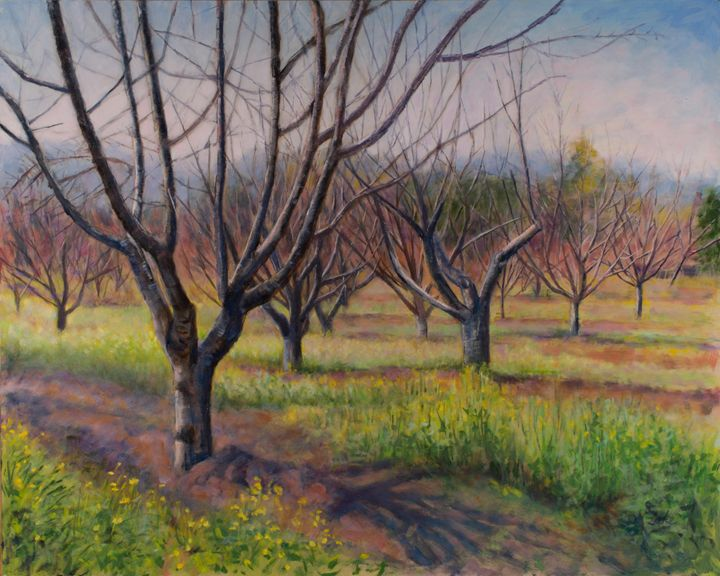 Saratoga Library Orchard in Fall - Denise Sils, Inc.