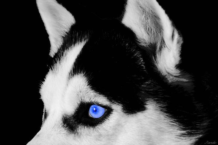 Wolf Dog - Renee Anderson