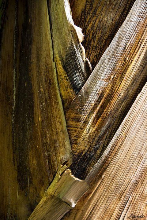 Banana Tree Bark - Renee Anderson
