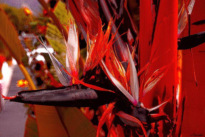 Color Flight #1 - Renee Anderson