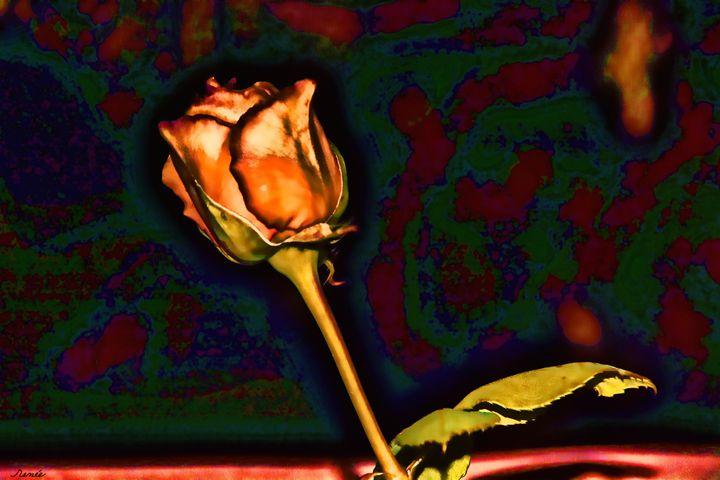 Painted Rose 1 - Renee Anderson
