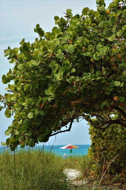 To the beach. Florida - karl krueger