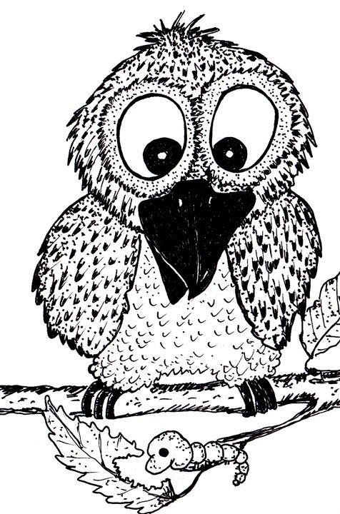 Owl - Mimbla