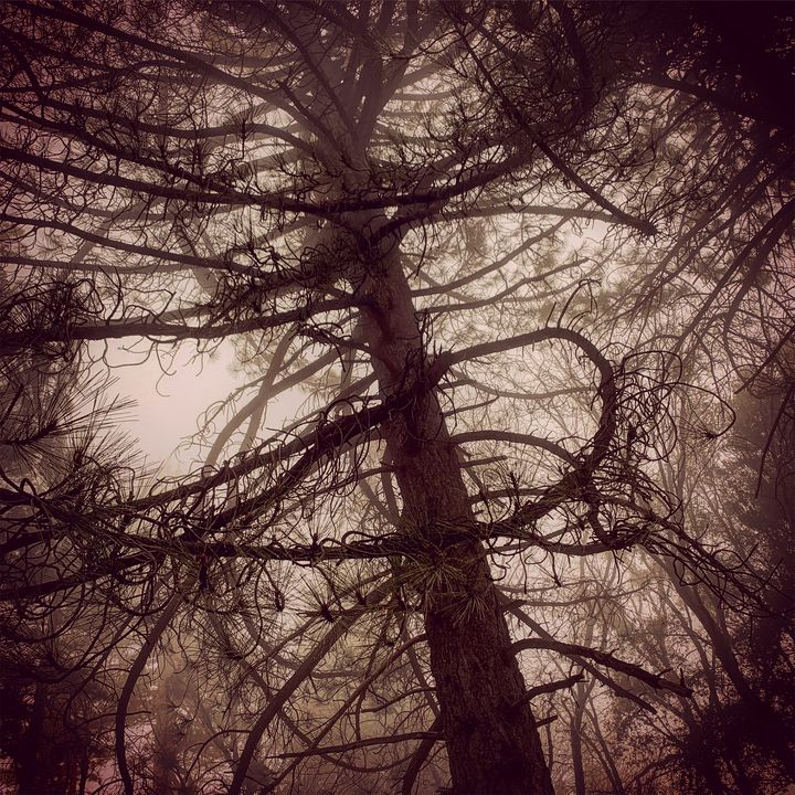 Foggy Morning - Daved Thom Images