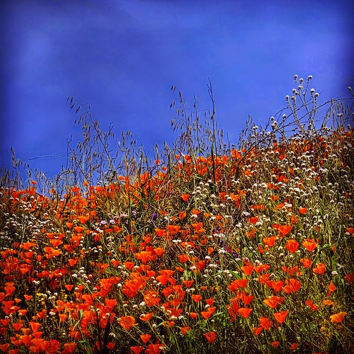 Wildflowers - Daved Thom Images