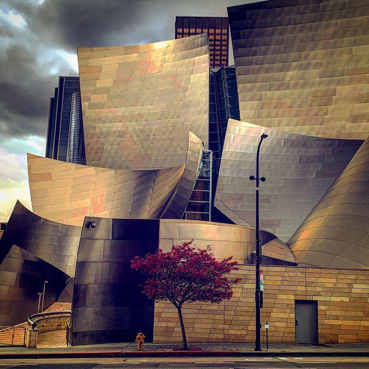 Disney Hall - Daved Thom Images