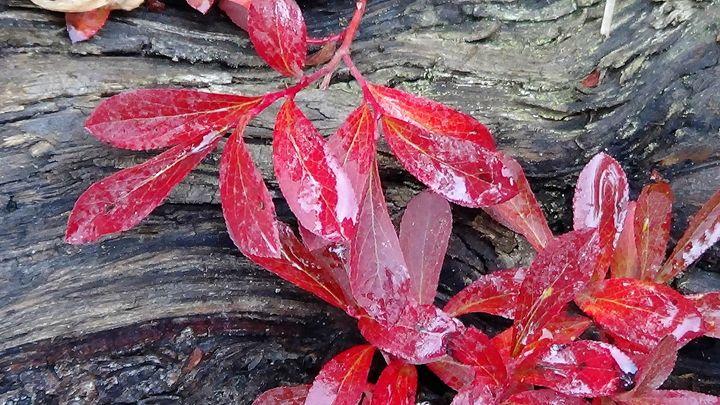 Red Gets My Eye - Amanda Paints LLC