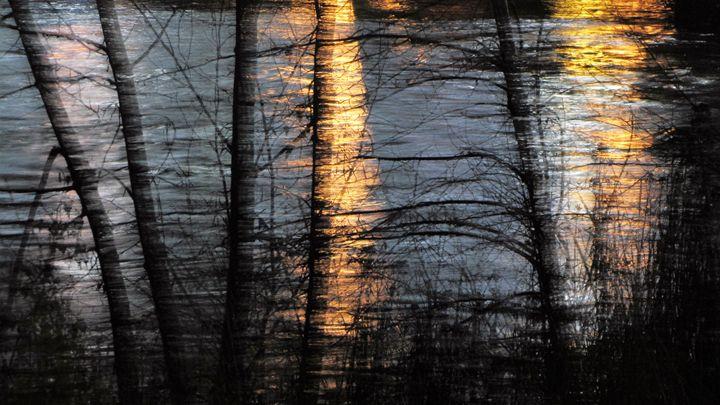 Light in the trees - Amanda Paints LLC