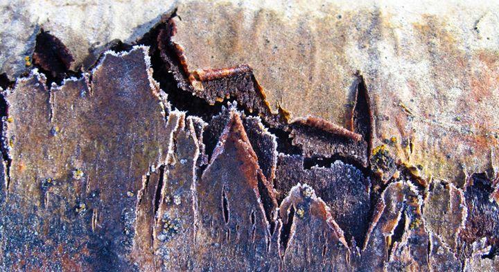 Frozen Tree Bark 2 - Amanda Paints LLC