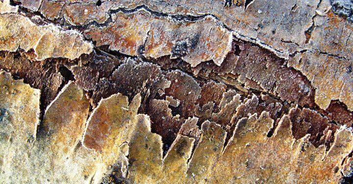 Frozen Bark - Amanda Paints LLC