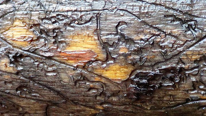 Bug Art - Amanda Paints LLC