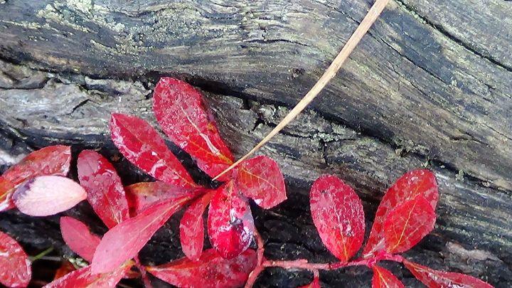 More of That RED! - Amanda Paints LLC