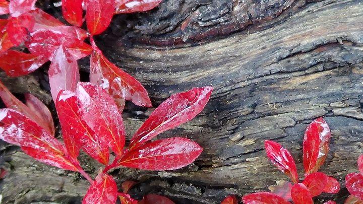 Red Gets My Eye 3 - Amanda Paints LLC
