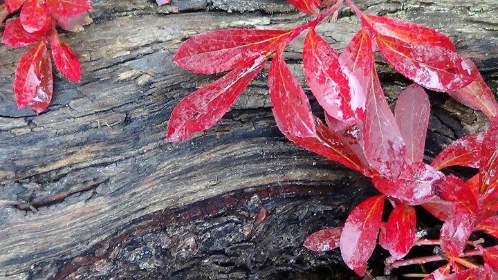 Red Gets My Eye 2 - Amanda Paints LLC