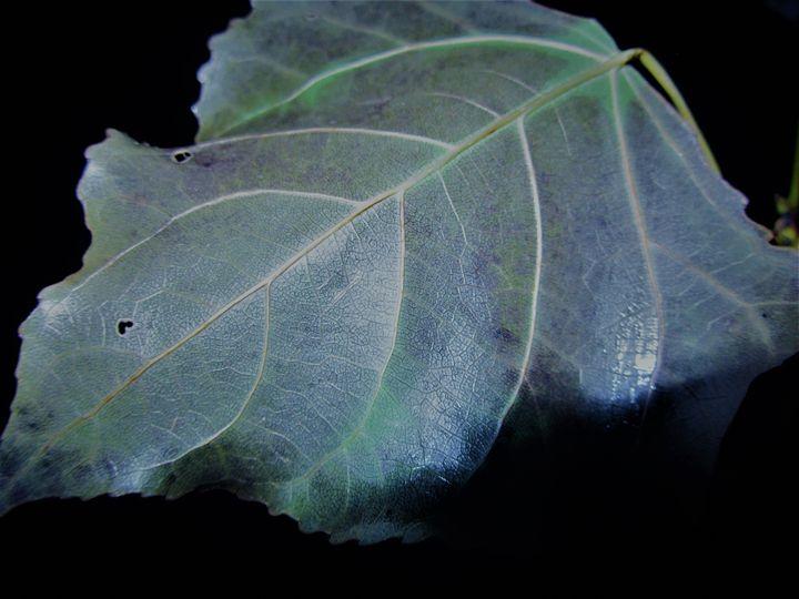 Flash Leaf 3 - Amanda Paints LLC