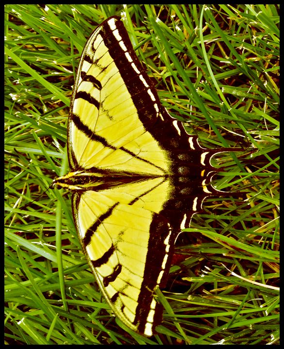 Butterfly 2 - Creations of a Seeker of Signs