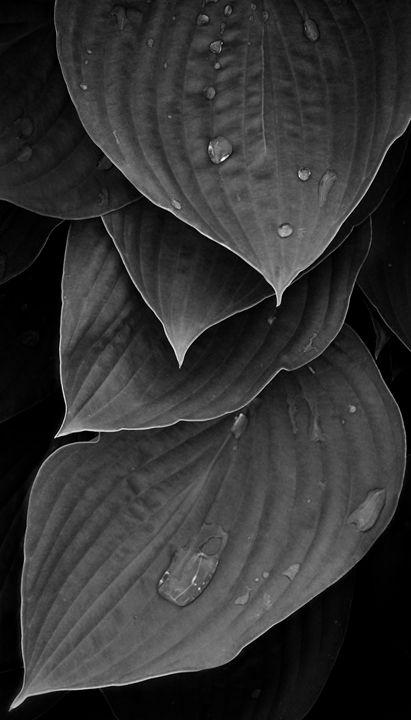 Tears - fototopia